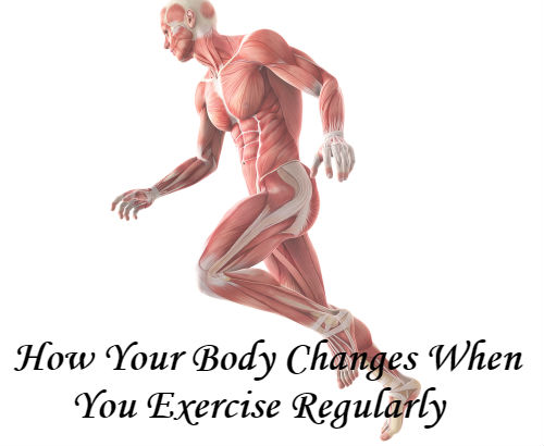 How Your Body Changes with Regular Exercise